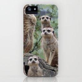 Meerkat 20140905 iPhone Case
