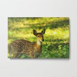 Little Bambi Deer Metal Print