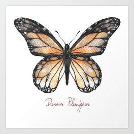 Danaus plexippus Art Print