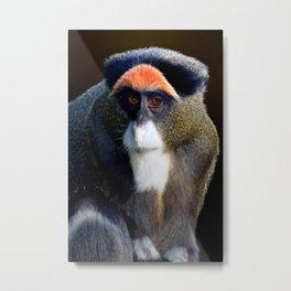 De Brazza's Monkey Metal Print