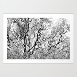 A tree and his crown in winter III Art Print