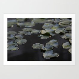 Water Lily Pads Art Print