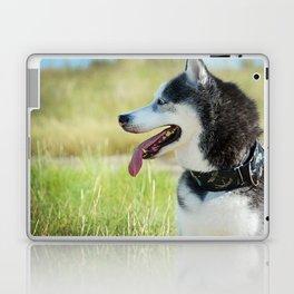 Husky Profile Laptop & iPad Skin