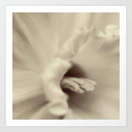 Daffodil 2 Art Print