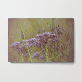Summer Botanical Meadow Marsh with Joe Pye Weed and Blue Vervain Wildflowers Metal Print