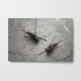 Stonefly nymphs Metal Print