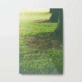 Row of trees Metal Print