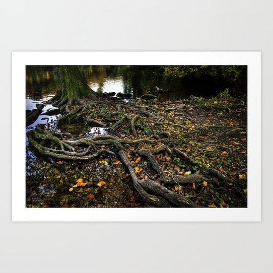 Solid roots Art Print