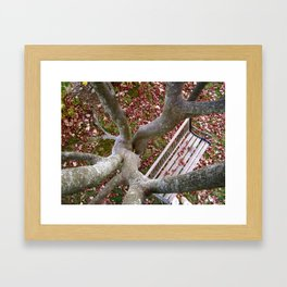 Hiding in the Trees Framed Art Print