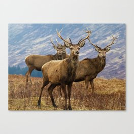 The four stags on the loch Canvas Print
