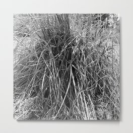 pampas grass leaves, black and white Metal Print