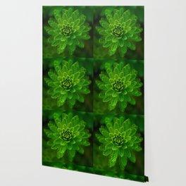 Green Flower | HD Design Wallpaper