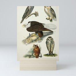 Hawl Owl, Screech Owl, Great Horned Owl, Florida Burrowing Owl, Bald Eagle10 Mini Art Print