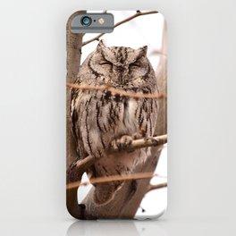 Wild Owl - Ivins, Utah iPhone Case
