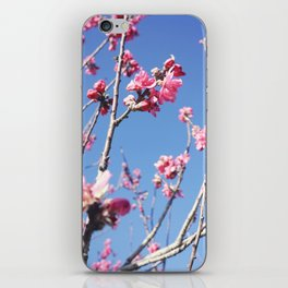 Blue Blossoms 03 iPhone Skin