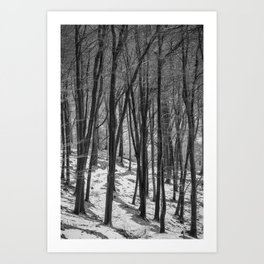 Through the Snowy Beech Wood Art Print