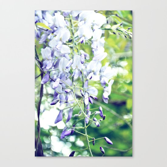 LOVELY WISTERIA Canvas Print