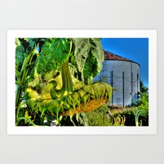 'Farm Sunflower' Art Print