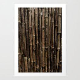 Bamboo Blind Art Print
