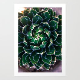 Queen Victoria's Agave Plant Art Print