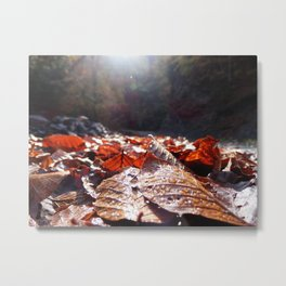Autumn leaves! Metal Print