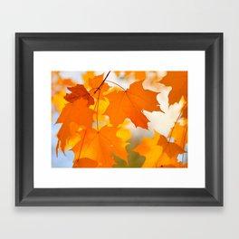 Yellow-orange Autumn Framed Art Print