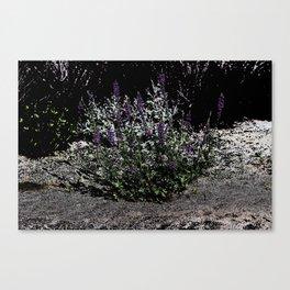 Pop Art Purple Desert Lupine Coachella Preserve Canvas Print