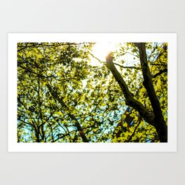 Sunshine in Astoria Art Print