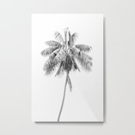 Palm in Black and White Metal Print