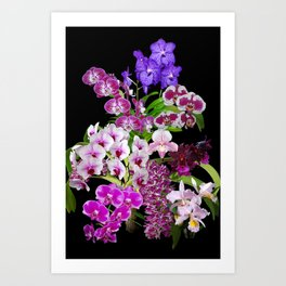 Orchids - Cool colors! Art Print