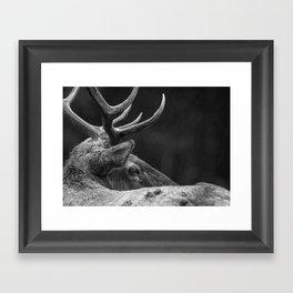 Rain Falls on a Bull Roosevelt Elk in Redwood National Park Framed Art Print