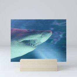 Shark Week Mini Art Print