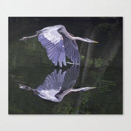 Great Blue Heron 2013 Canvas Print