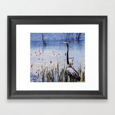 Great Blue Heron In The Florida Wetlands Framed Art Print