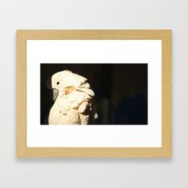Bird Shadow Framed Art Print