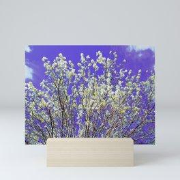 Ornamental Pear Tree Blossom Mini Art Print