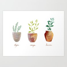 Thyme, sage and bay leaves Art Print