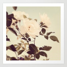 Gorgeous Rose Photography Art Print