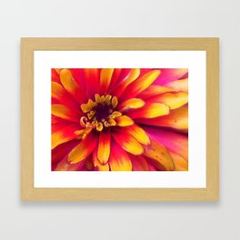 Close Up Flower Framed Art Print