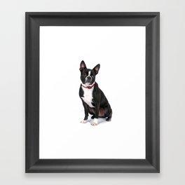 Bruno (Khalua) (Client File) (Photo #1) Framed Art Print