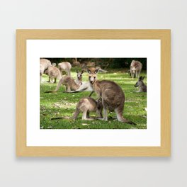 Mother Eastern Grey Kangaroo and Joey Framed Art Print