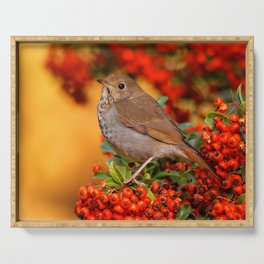 Hermit Thrush on the Scarlet Firethorn Serving Tray