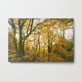 Autumnal scenery. Landscape in yellow and brown tones at the Montseny in Catalonia, Spain. Metal Print