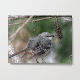 Mockingbird in a Sumac Tree Metal Print