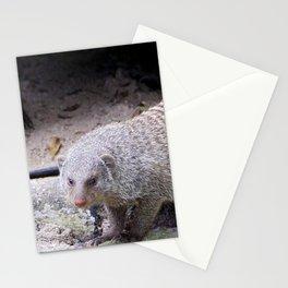 Glaring Mongoose Stationery Cards