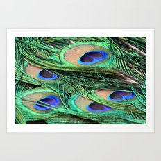 Peacock Feathers Close Up Art Print