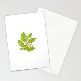 Autumn Season Nutmeg Spices  Stationery Cards