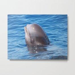 Cute wild pilot whale baby Metal Print