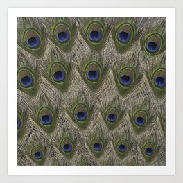 Peacock tail Art Print