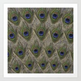 Peacock tail Art Print